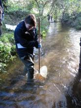 Riverfly Surveying. Photo: Essex Wildlife Trust