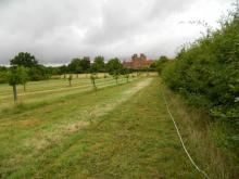 Hedgerow at Layer Marney Tower. Photo: Essex Wildlife Trust
