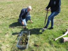 Heather Planting at Layer Breton Heath LoWS