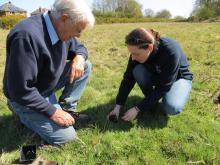 Heather planting on Layer Breton Heath